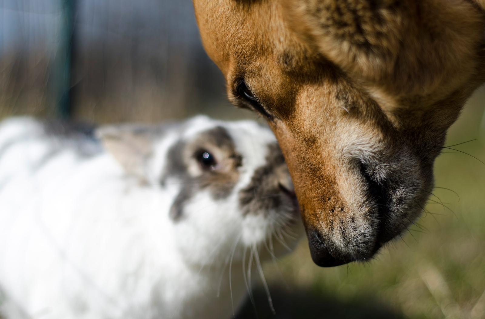 pet animal rabbit bunny dog friends wildlife